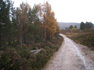 Deer fence removed from woods south of the Black Bridge, Cairngorms