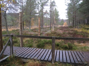New fence around Mar Lodge Esttae, Cairngorms